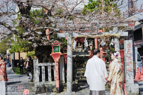 京都賞櫻》衹園新橋白川通 藝妓和花街 鴨川旁充滿京都味的迷人巷弄