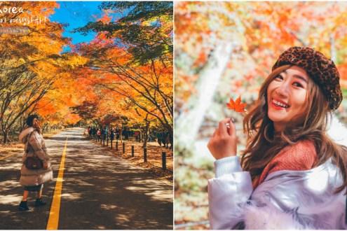 首爾賞楓一日遊》韓國8大美景之一內藏山國立公園 吃全州韓牛火鍋