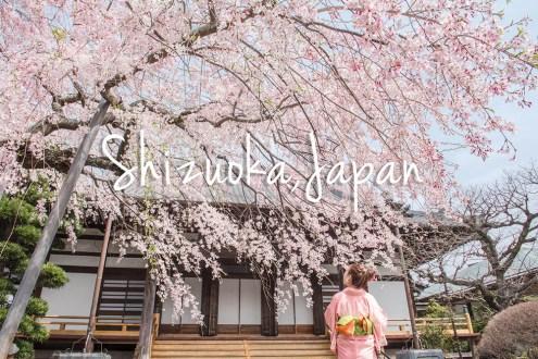 靜岡自由行攻略》平價版北海道自駕玩靜岡最好玩 超難得的搭機繞富士山體驗