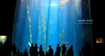 【墾丁景點】國立海洋生物博物館:海底隧道、小白鯨、小企鵝...來墾丁,怎麼能錯過這!? mimi還巧遇野放綠蠵龜活動。
