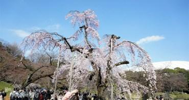 【東京賞櫻景點】小石川後樂園,來美麗的日式庭園欣賞滿開的枝垂櫻