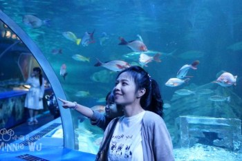 【東京親子景點】品川水族館(しながわ水族館),漫步於海底隧道中好夢幻