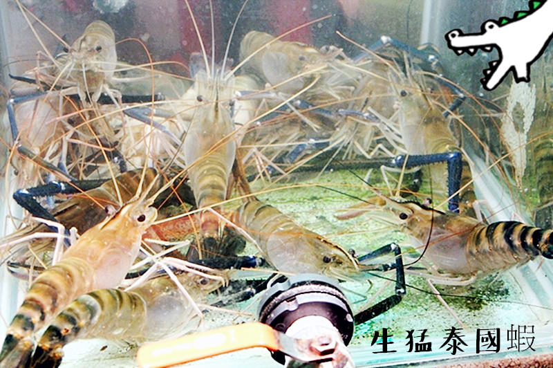 高雄新興美食 | 生猛泰國蝦 現烤活蝦 六合夜市 台灣十大小吃 捷運美麗島站