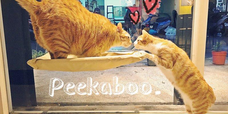 捷運新埔站美食 貓嘰咕 Peekaboo 板橋貓咪餐廳 寵物餐廳 輕食 義式料理