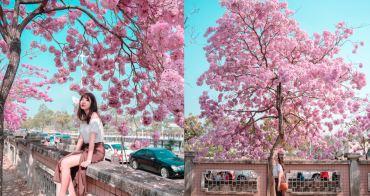 嘉義洋紅風鈴木 嘉義特殊教育學校:2019粉紅限定,爆炸粉紅色,比櫻花還美