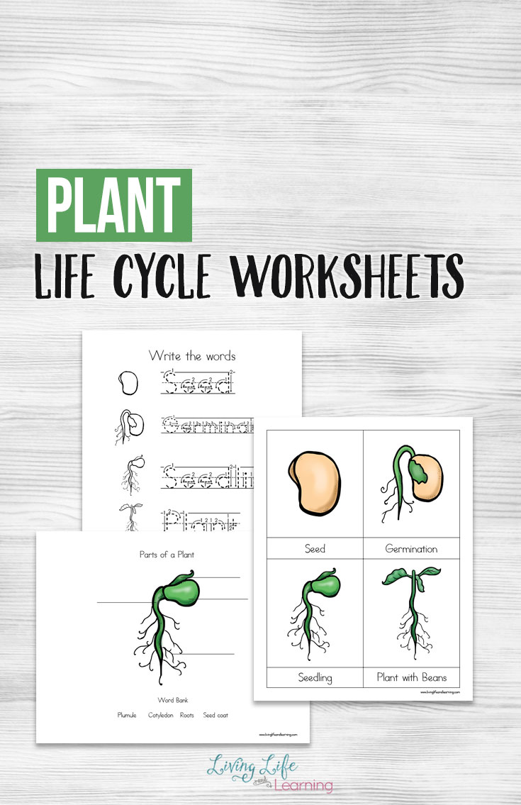Free Printable Plant Life Cycle Worksheets