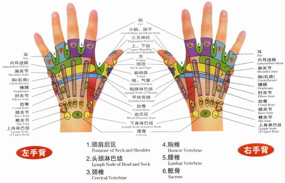 最詳細的手掌穴位圖解大全—小手掌大經絡