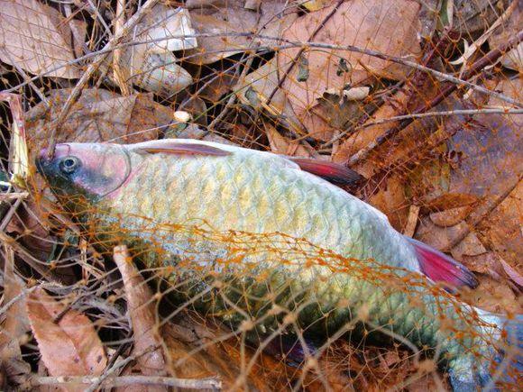 有多少人釣到過這種魚,水中消失的精靈_搜狐體育_搜狐網