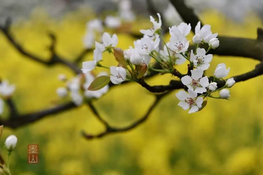 推薦   那些形容春天的成語背后膾炙人口的古詩詞