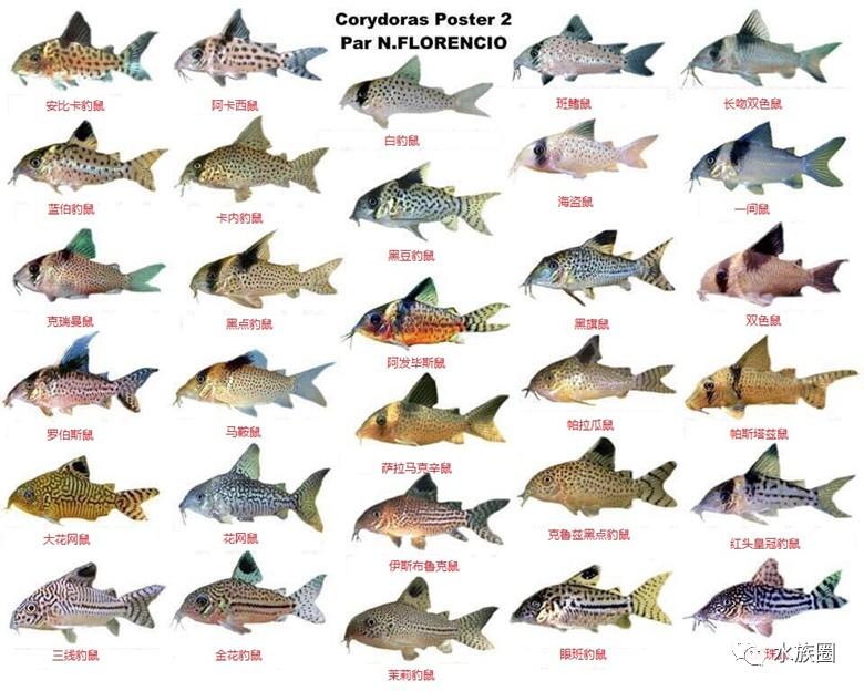 鼠魚圖鑒——部分為音譯