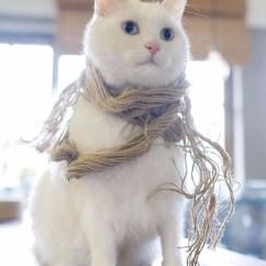 Kitchen Hats Island Lighting Fixtures 田园猫的颜值可以多高?_搜狐宠物_搜狐网
