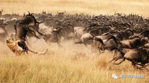 【地理常識】(016)世界上最大的斷裂帶——東非大裂谷
