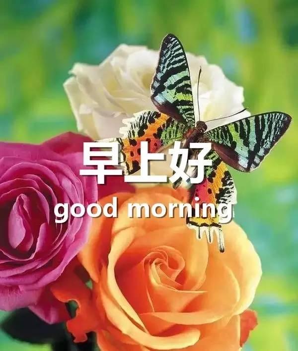 早安心語圖片 早安圖片祝福