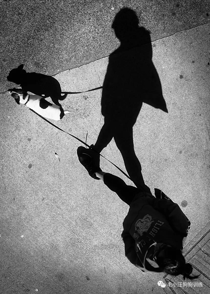 你知道嗎?我這一生追隨的。就只是你的影子。_搜狐寵物_搜狐網