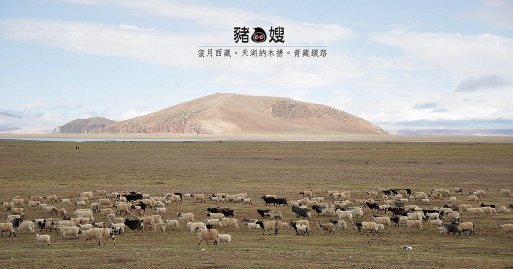 │西藏│青藏鐵路當雄站喝甜茶。天湖納木措有晴天。藏獒氂牛來賺錢。蜜月DAY4