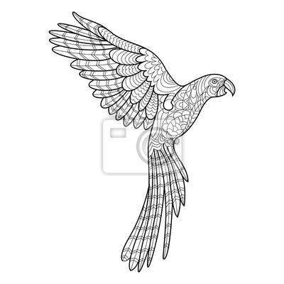 Malvorlage Papagei Ara
