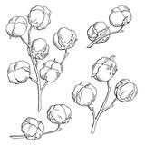 Narzisse blume grafik schwarz weiß isoliert skizze