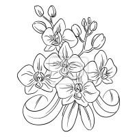 Malvorlage Blumenstrau. Fototapete Orchidee Blume ...