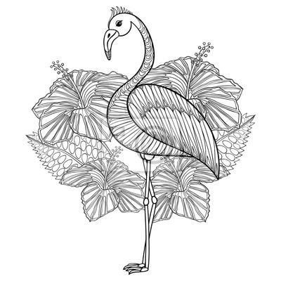 Flamingo Malvorlage Einfach