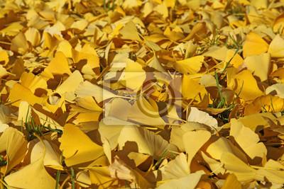 tapis de feuilles mortes de ginkgo images myloview