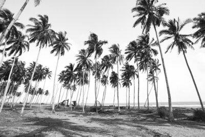papiers peints vue de cocotier en noir et blanc avec effet vintage