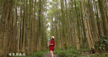 南投埔里景點》埔里黑森林秘境。隱藏版的奇幻森林意境