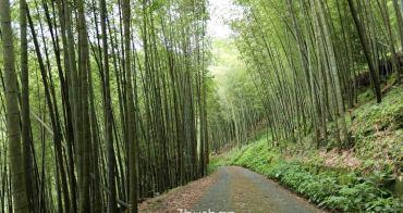 南投竹山大鞍》孟宗竹蔭隧道。仿佛武俠劇裡的竹林場景,全長2公里的翠綠竹蔭隧道