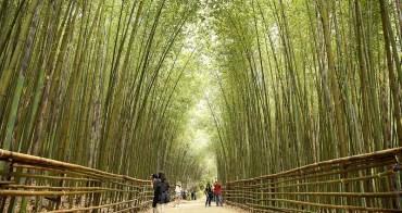 【苗栗泰安景點】泰安「烏嘎彥竹林隧道」媲美日本京都嵐山~俗稱台灣版嵐山竹林小徑,苗栗今年爆紅打卡點。