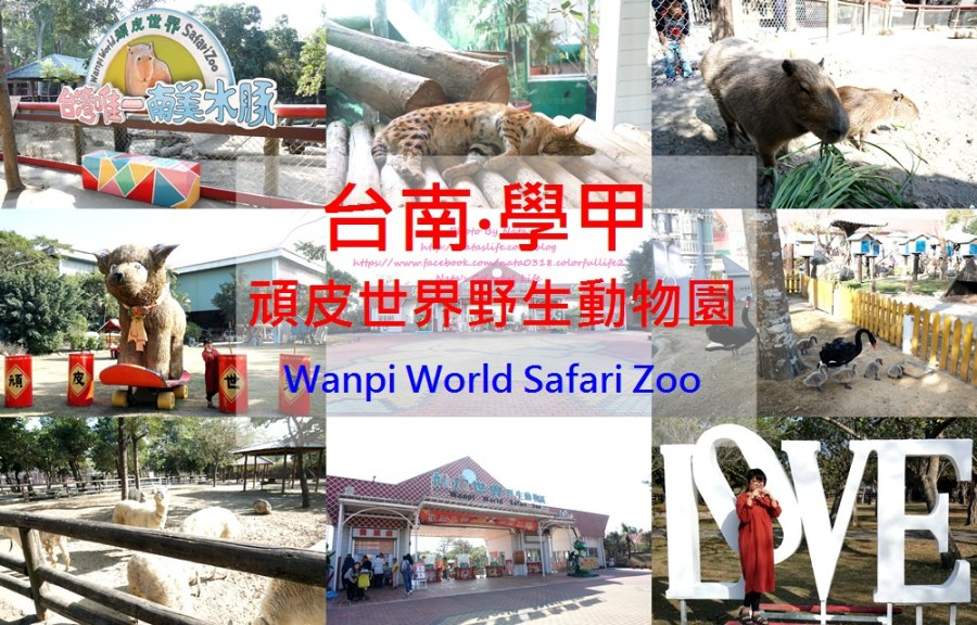 台南旅遊│台南學甲│頑皮世界野生動物園。全台就這有南美水豚近距離餵食秀、還有新人氣王藪(ㄙㄡˇ)貓~增加孩子與動物之間親近