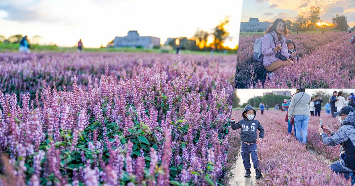 楊梅仙草節,夢幻紫色仙草花海、浪漫走一波
