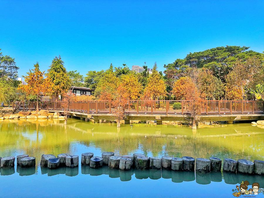 高雄市區最美落羽松景緻,凹子底公園,湖泊倒影、療癒美景