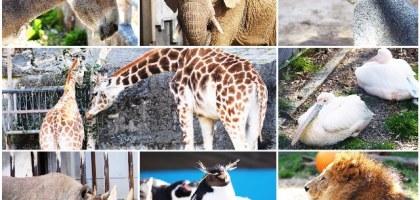 【名古屋】東山動物園/植物園 春天賞櫻及親子旅遊的推薦景點