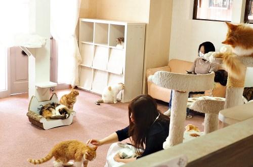 愛知、半田|にゃおかふぇ貓咖啡館.體驗被貓療癒的空白時光