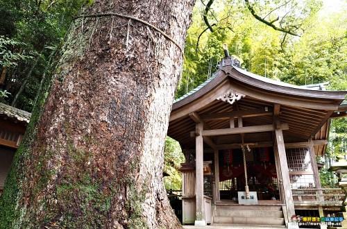 長崎|鎮西大社諏訪神社.充滿寧靜力量的除厄神社