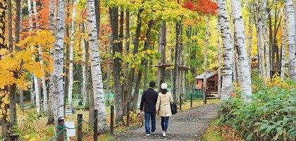 北海道、富良野|風之花園.森林裡的英式花園