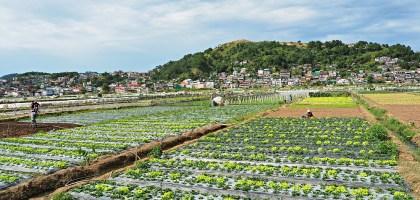 菲律賓、碧瑤BECI遊學日誌 Strawberry picking.來採草莓吧!