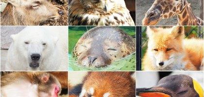 北海道|旭山動物園.NG動物好療癒