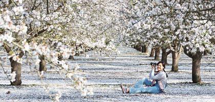 美國、加州|弗雷斯諾Fresno County Blossom Trail.加州版三生三世十里桃花