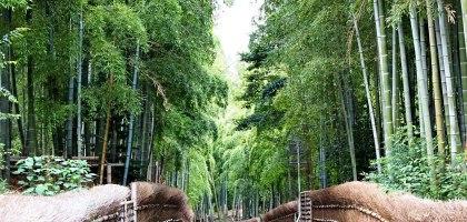 京都深度之旅–竹之京都:長岡京市、向日市、大山崎町