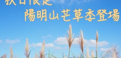 陽明山芒草季登場!秋日限定的健行美景