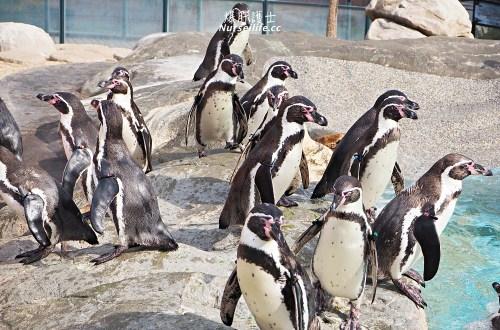 山口|下關海響館.日本最大的企鵝村,還可以體驗餵食秀!