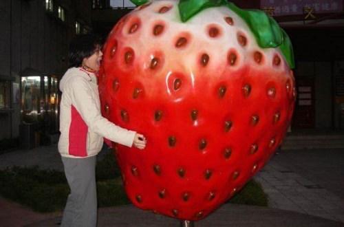 大湖草莓祭