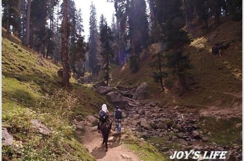 【印度】Pahalgam騎馬記之前進Baisaran