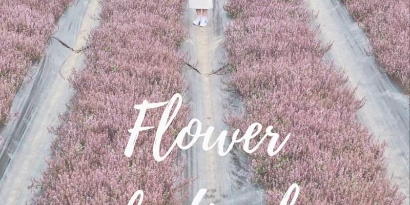 桃園花彩節 台版的普羅旺斯?
