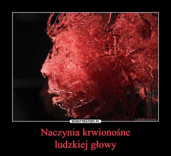 Naczynia krwionośne ludzkiej głowy - Obrazkowo.pl - najlepsze memy w sieci.