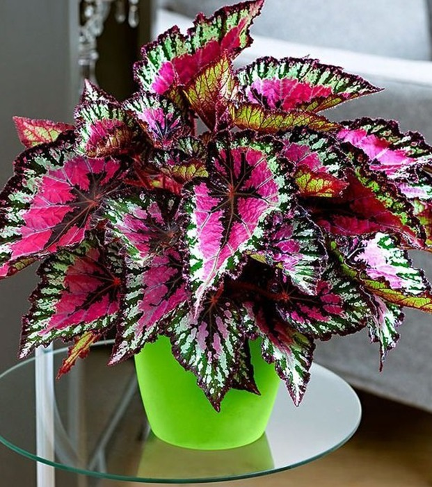 Non Toxic Indoor Plants