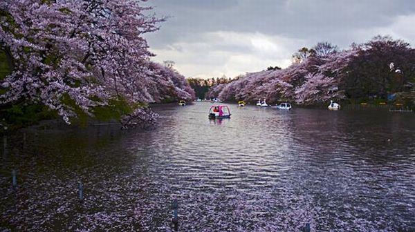Taman Inokashira, Jepang (Foto: TIME)
