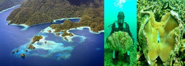 Pulau Labengki dengan kekayaan laut berupa kima (Foto: Ahmad Nizar/Sindo TV)