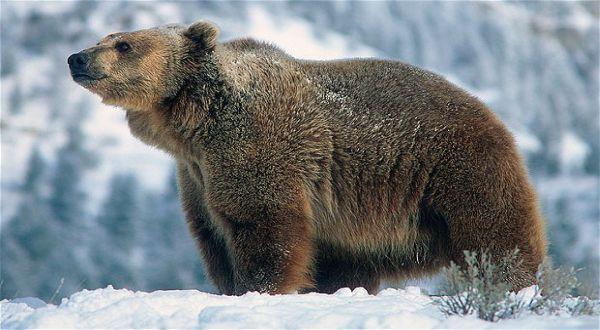 The female bears visit Shopping Centre