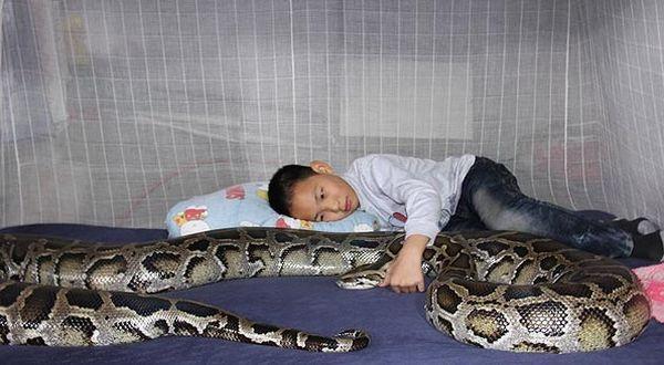 Bocah yang dibesarkan oleh ular piton (Foto: the Mirror)